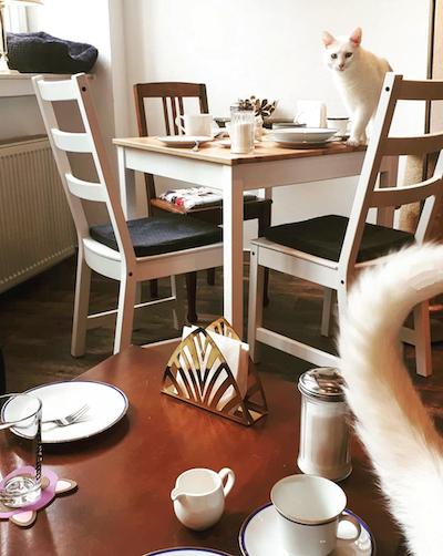 Katzen Café Miezhaus