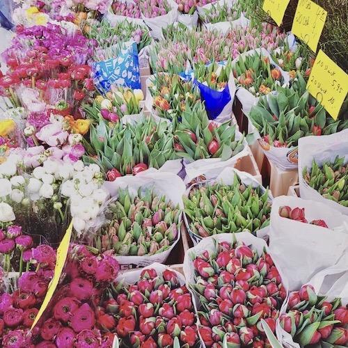 Tulpen in Bielefeld auf dem Altstadtmarkt