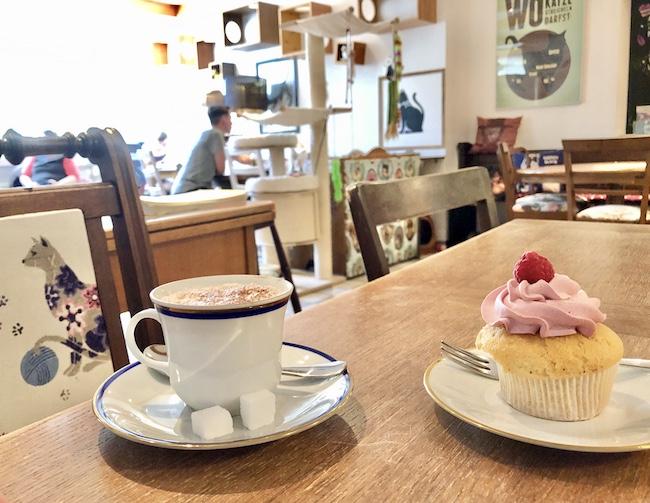 KATZENCAFÉ MIEZHAUS. Cafés in denen man gut arbeiten oder lernen kann in Bielefeld