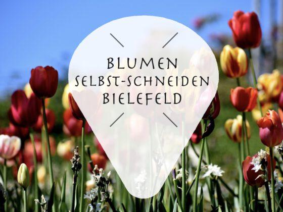 Frische Blumen selbst schneiden in Bielefeld