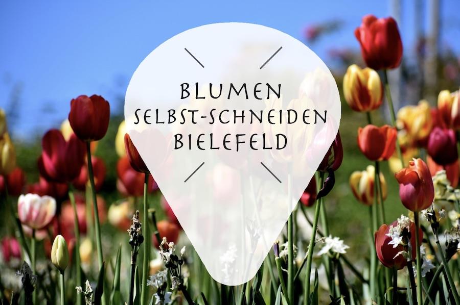 Frische Blumen zum selbst schneiden in Bielefeld